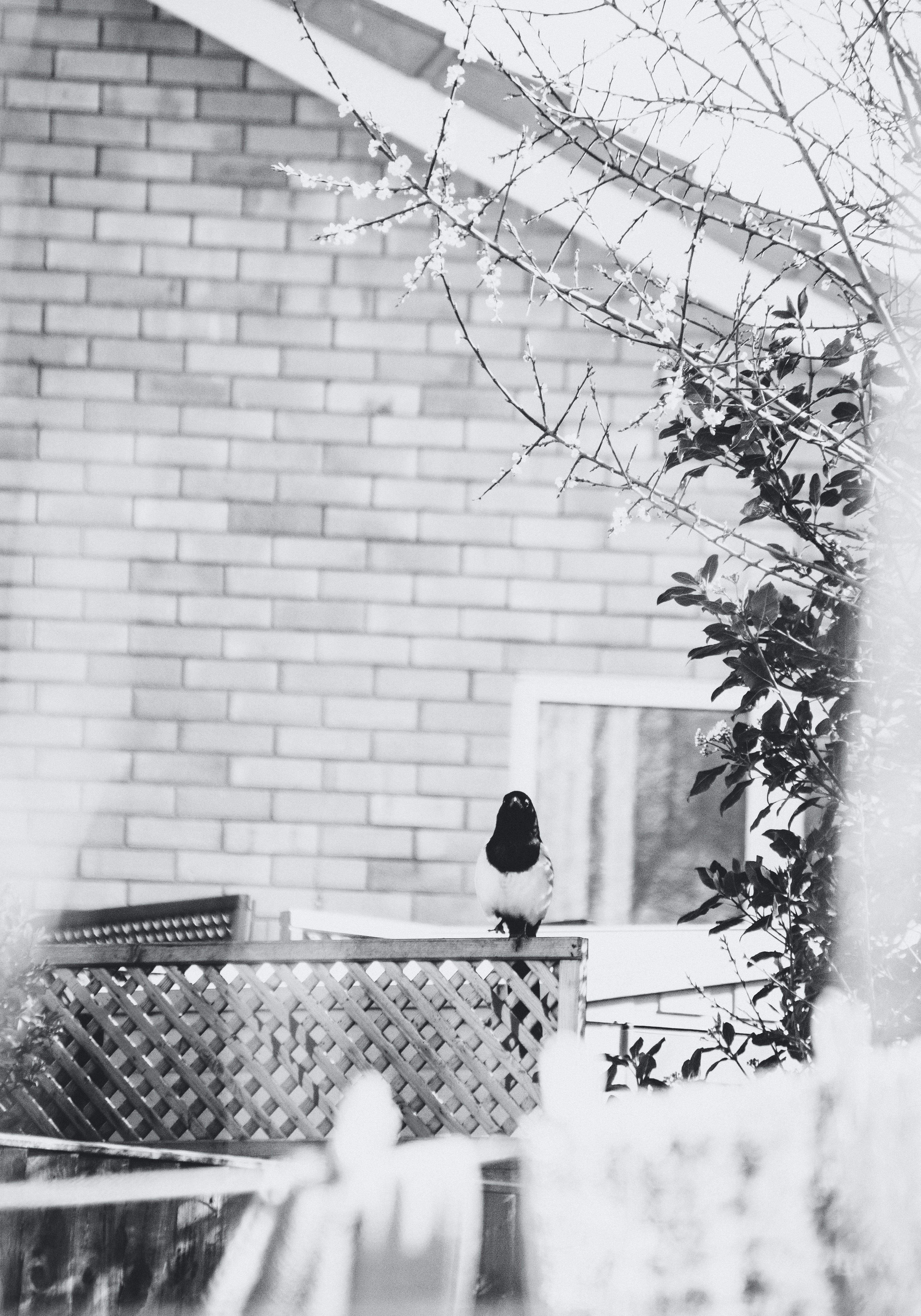 Black and White Photograph of Perching Bird