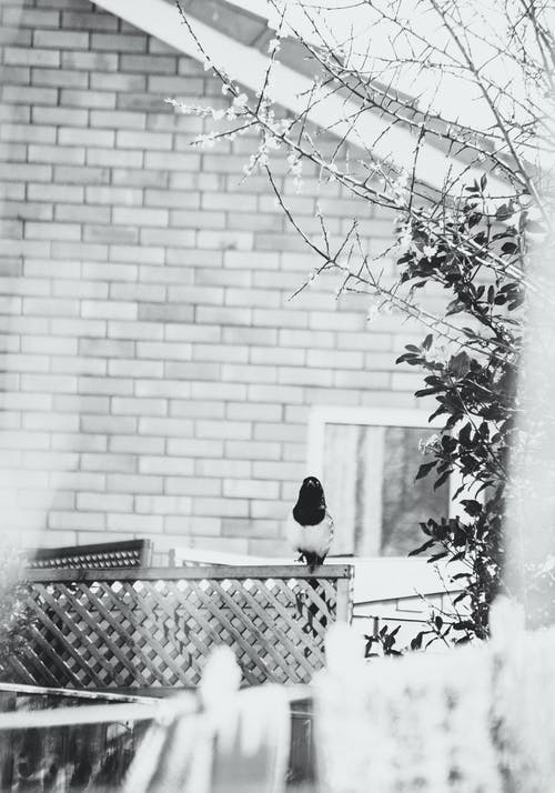棲息的鳥, 黑與白 的 免費圖庫相片