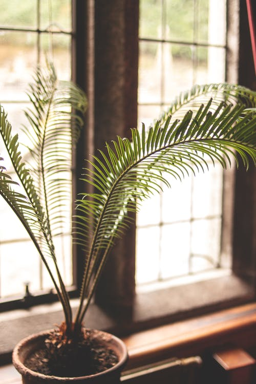 Green Fern Plant In Front Of Window