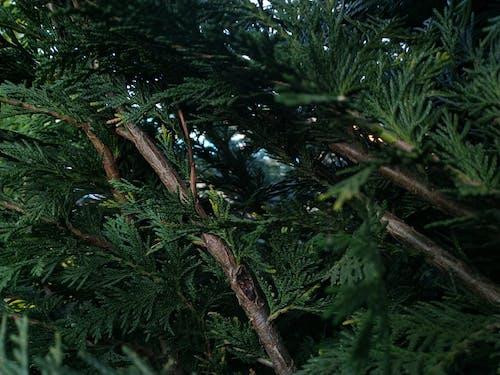Ingyenes stockfotó ág, fa, gyár témában