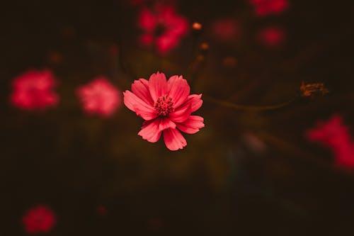 bitki örtüsü, çiçek, Çiçek açmak, HD duvar kağıdı içeren Ücretsiz stok fotoğraf