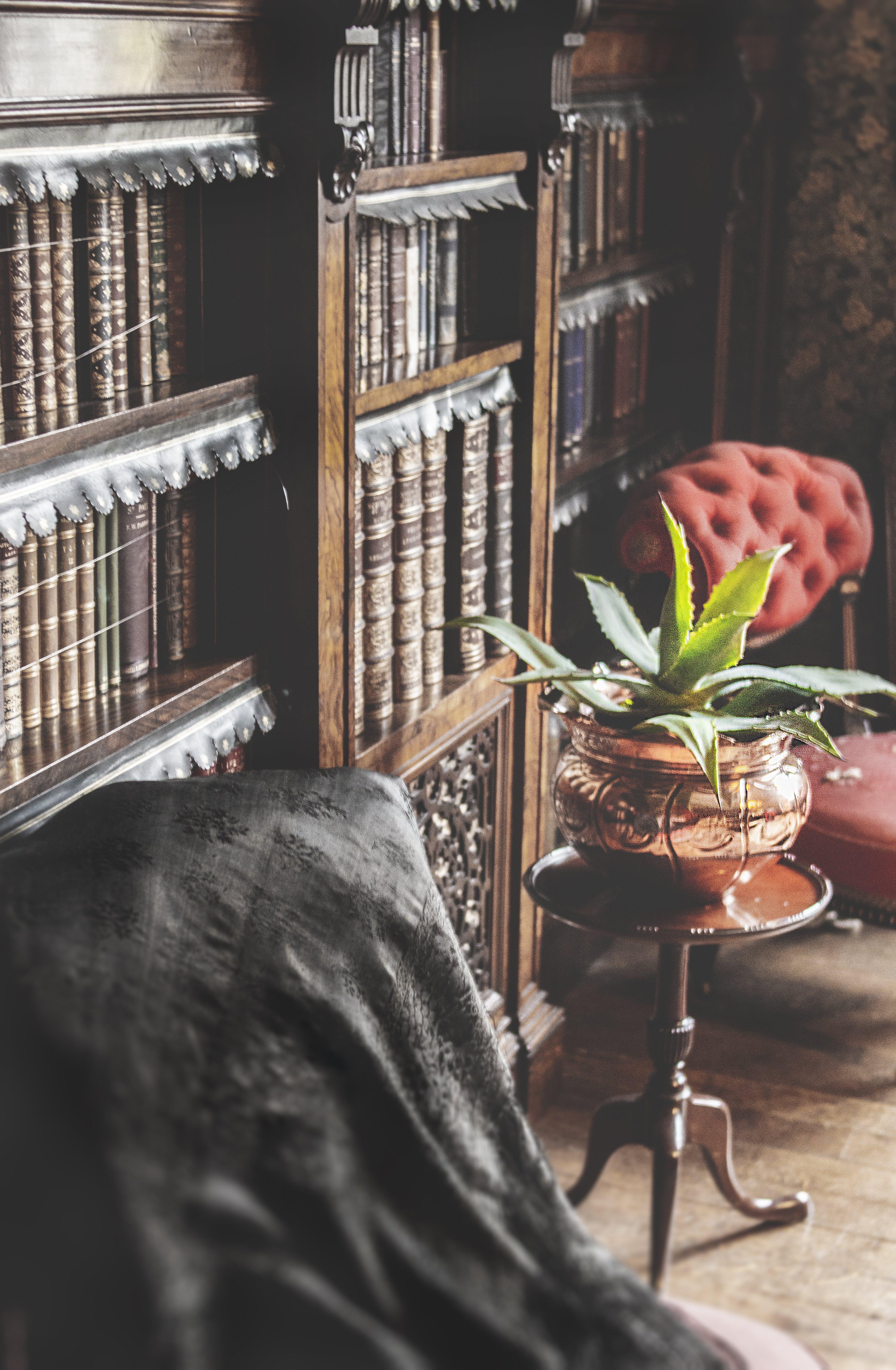 Green Leafed Plant Beside Book Shelf