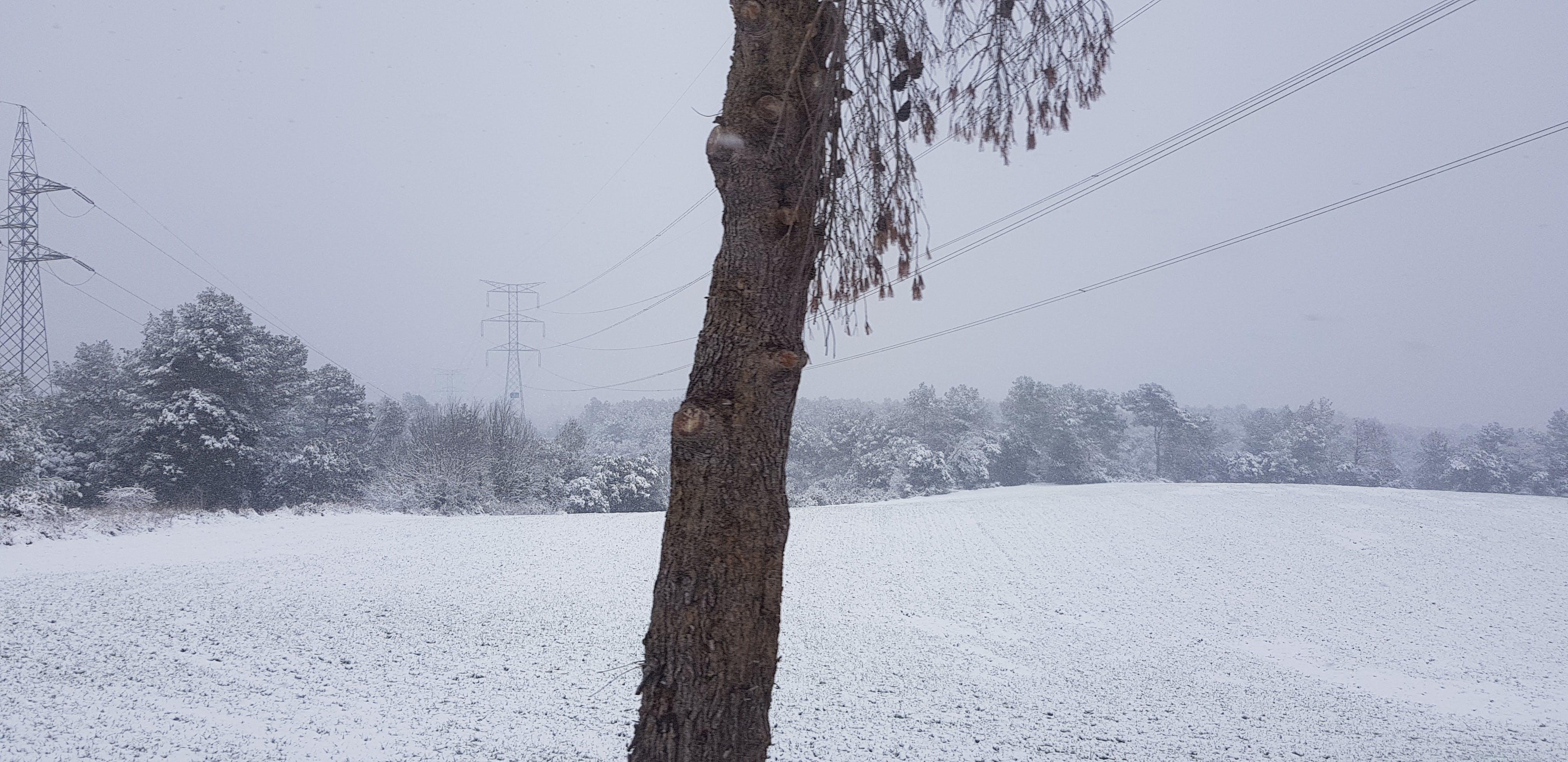 Free stock photo of colour, snow, tree, white