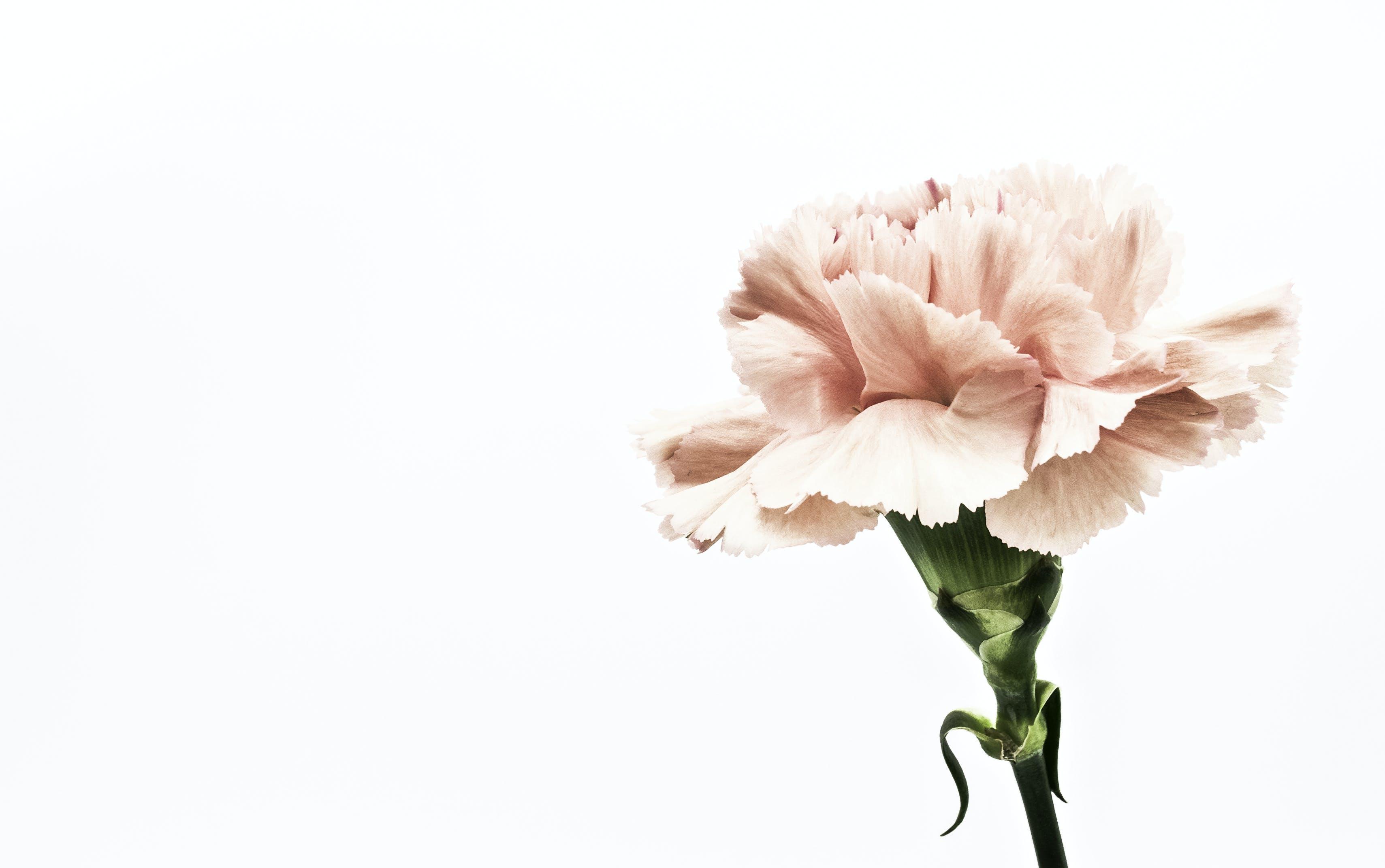 Pink Flower Artwork