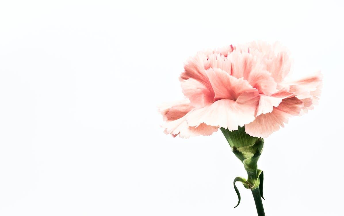 Rosa Blumen Kunstwerk