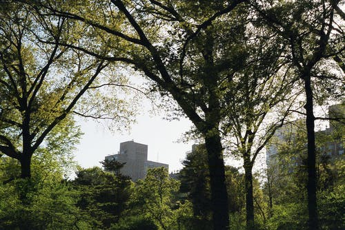 Ảnh lưu trữ miễn phí về #tiếng việt, ban ngày, cành cây, cây
