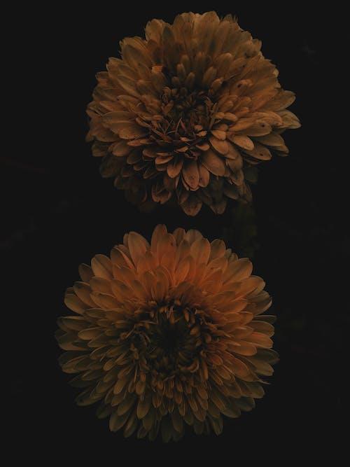 Free stock photo of beautiful flowers, flowers, mobilechallenge