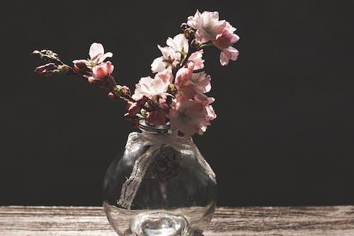 Gratis arkivbilde med blomster, blomsterblad, blomstre, delikat