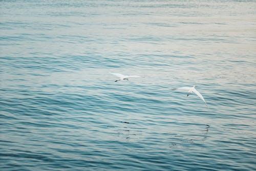 Darmowe zdjęcie z galerii z garces, morze, niebieski, ocean