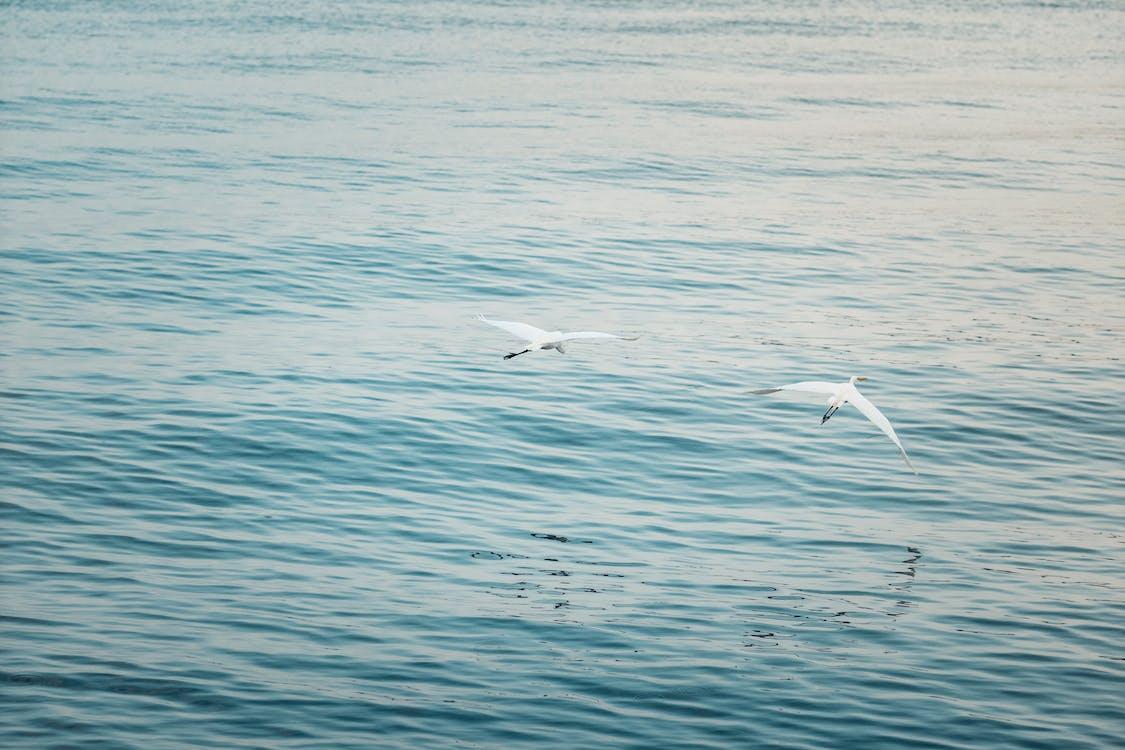 áo choàng, biển, đại dương