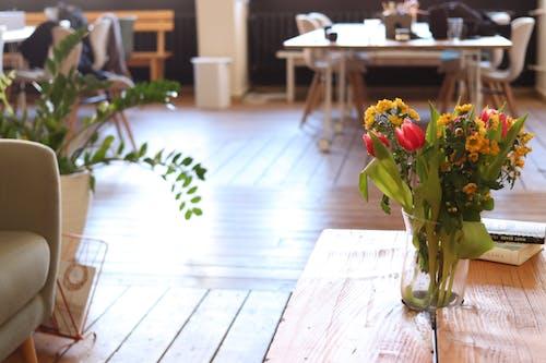 Ảnh lưu trữ miễn phí về đi văng, đồng nghiệp, đồng nghiệp nữ, hoa