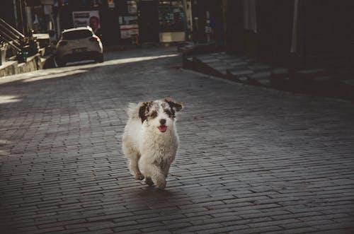 Imagine de stoc gratuită din adorabil, animal, animal de casă, blană