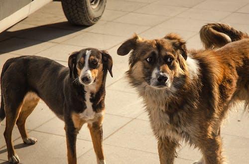 Imagine de stoc gratuită din câini, căutare
