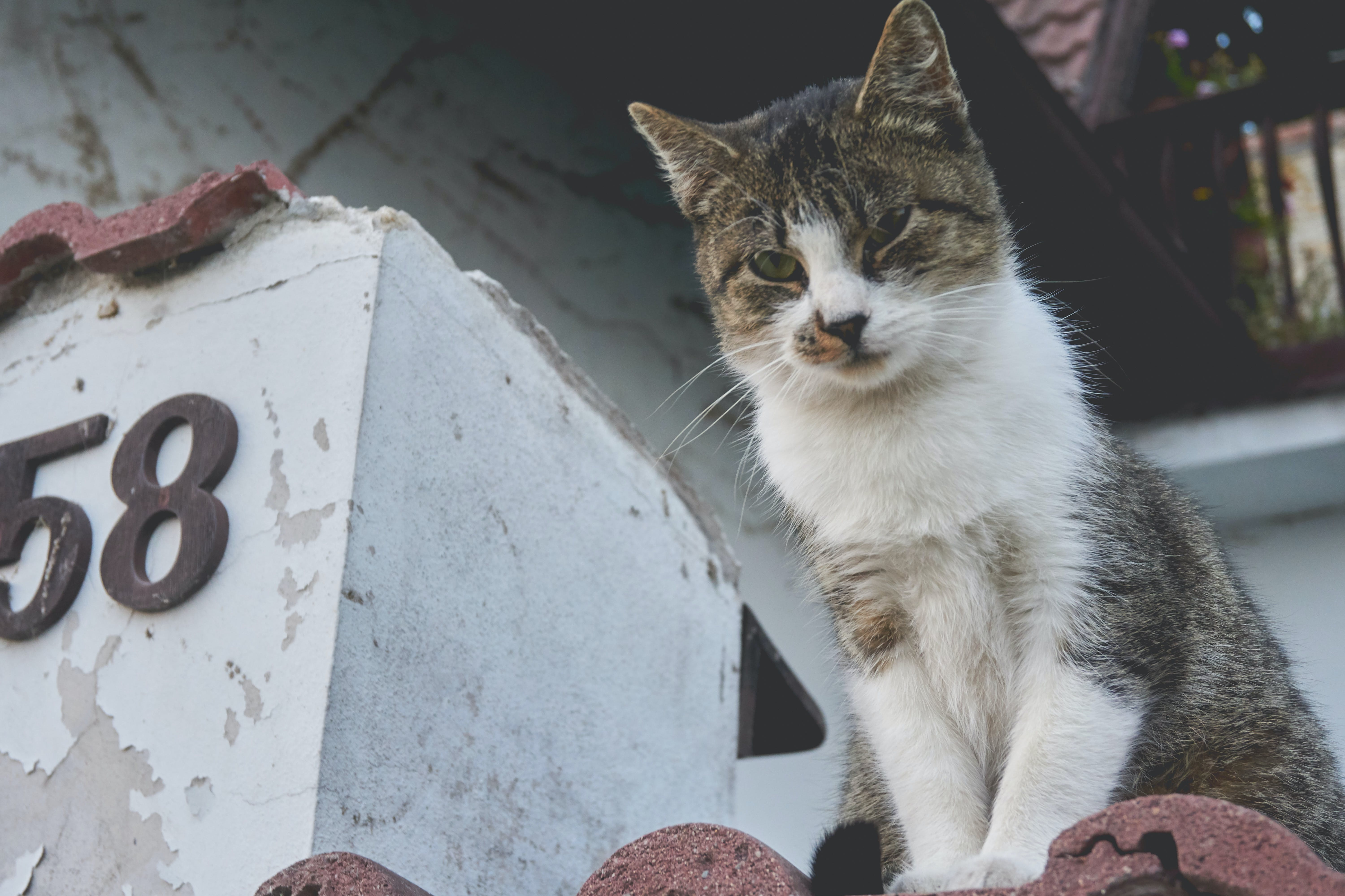 White and Gray Cat on Brown Roof