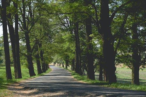 Ağaç dalları, ağaç gövdeleri, ağaçlar, çevre içeren Ücretsiz stok fotoğraf