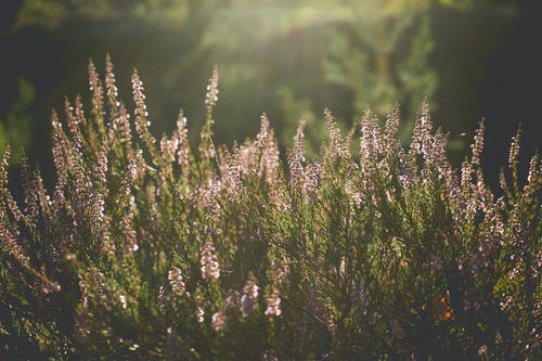 Gratis lagerfoto af blomster, flora, kraftværker, solrig