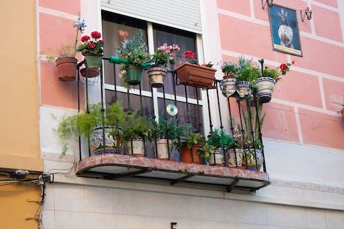 Kostenloses Stock Foto zu andalusien, balkon, blumen