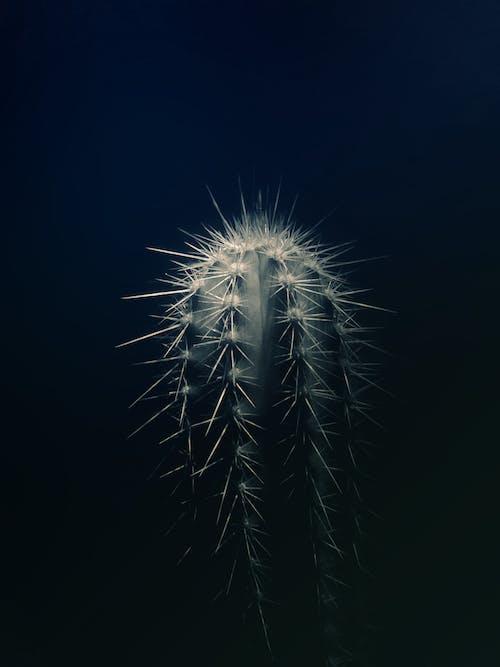 Gratis lagerfoto af close-up, farve, form, kaktus
