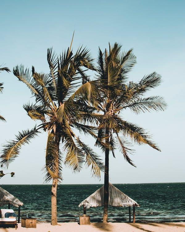 drzewa kokosowe, egzotyczny, krajobraz