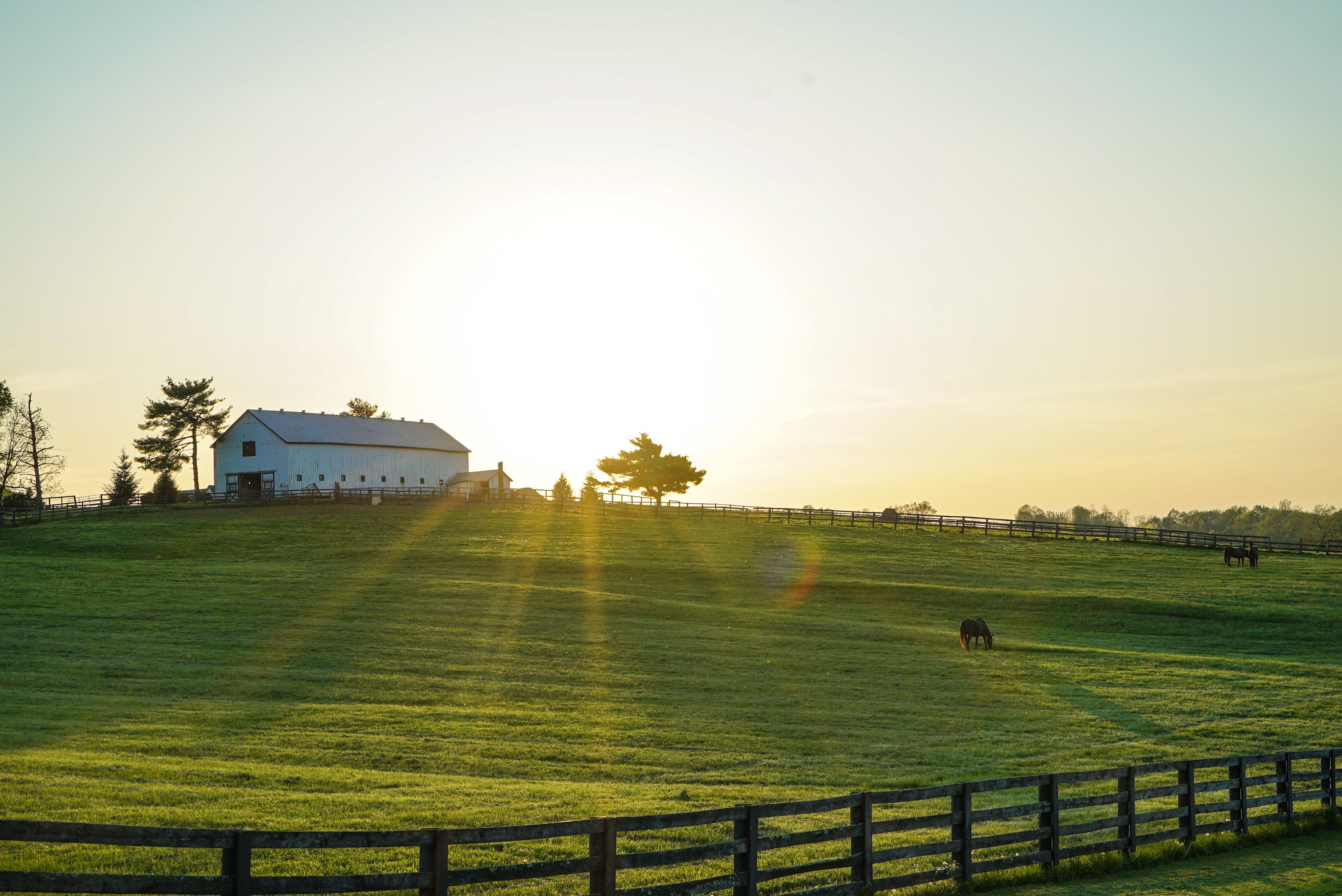 Fotos de stock gratuitas de arboles, caballo, campo, campos de cultivo