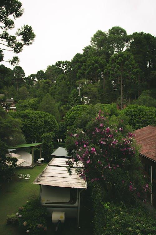 Бесплатное стоковое фото с архитектура, деревья, дневной свет, живописный