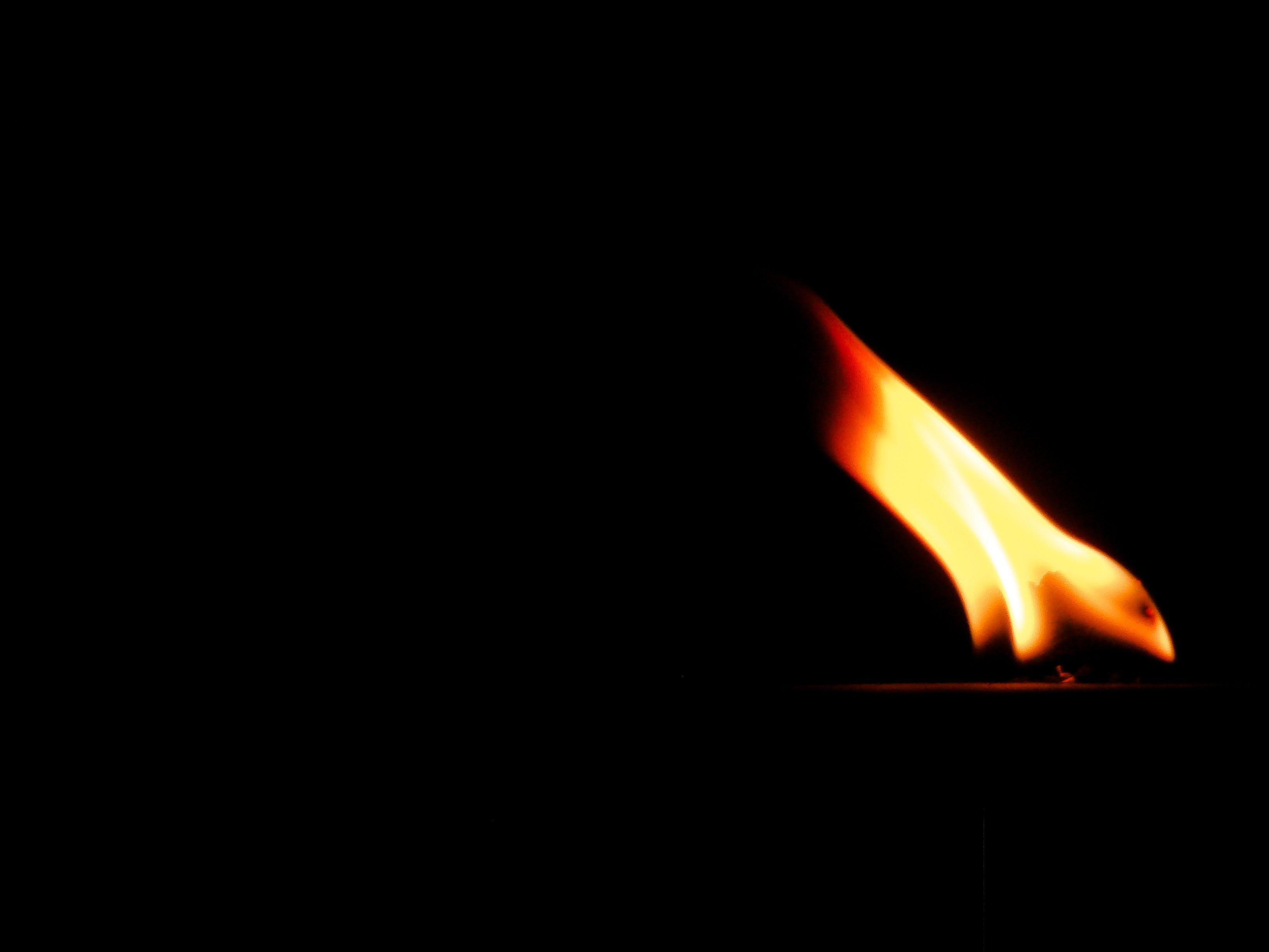 Foto d'estoc gratuïta de foc, foscor, foto nocturna, fotografia de natura