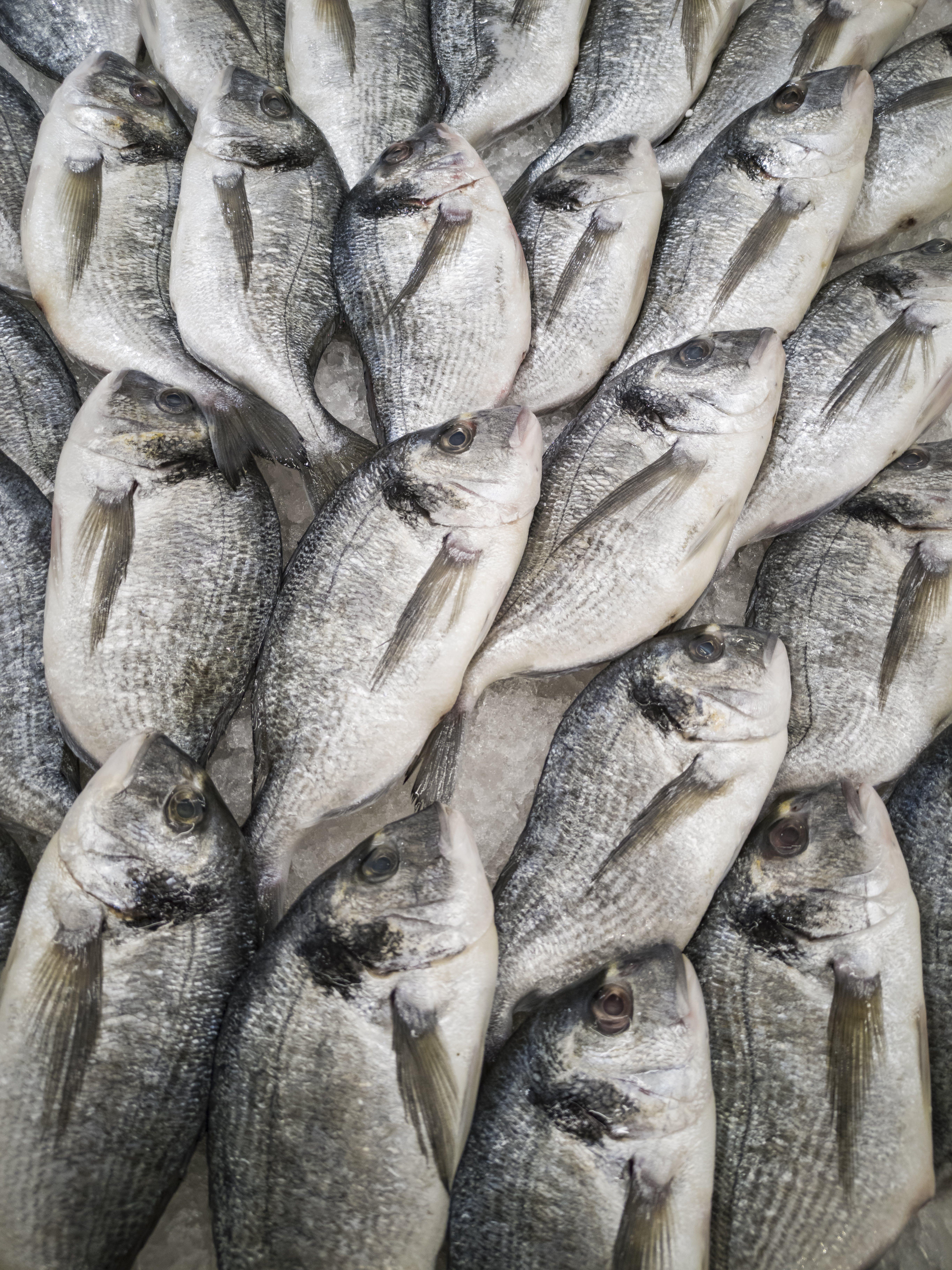 Kostenloses Stock Foto zu eis, essen, fang, fische