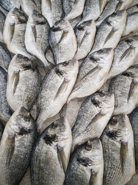 alimento, animal, barbatana