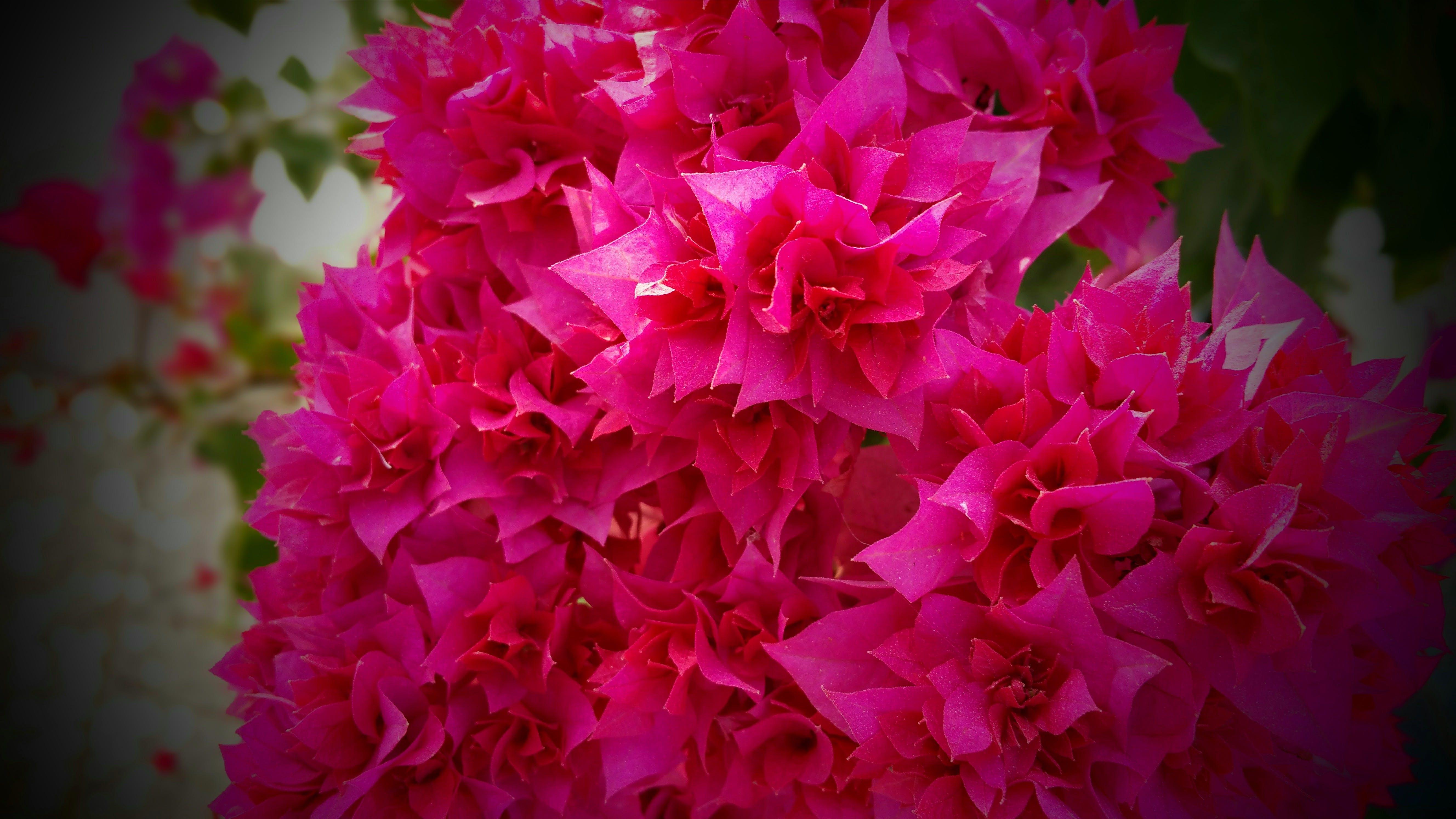 Gratis lagerfoto af blomster, blomstrende, bryllup, buket