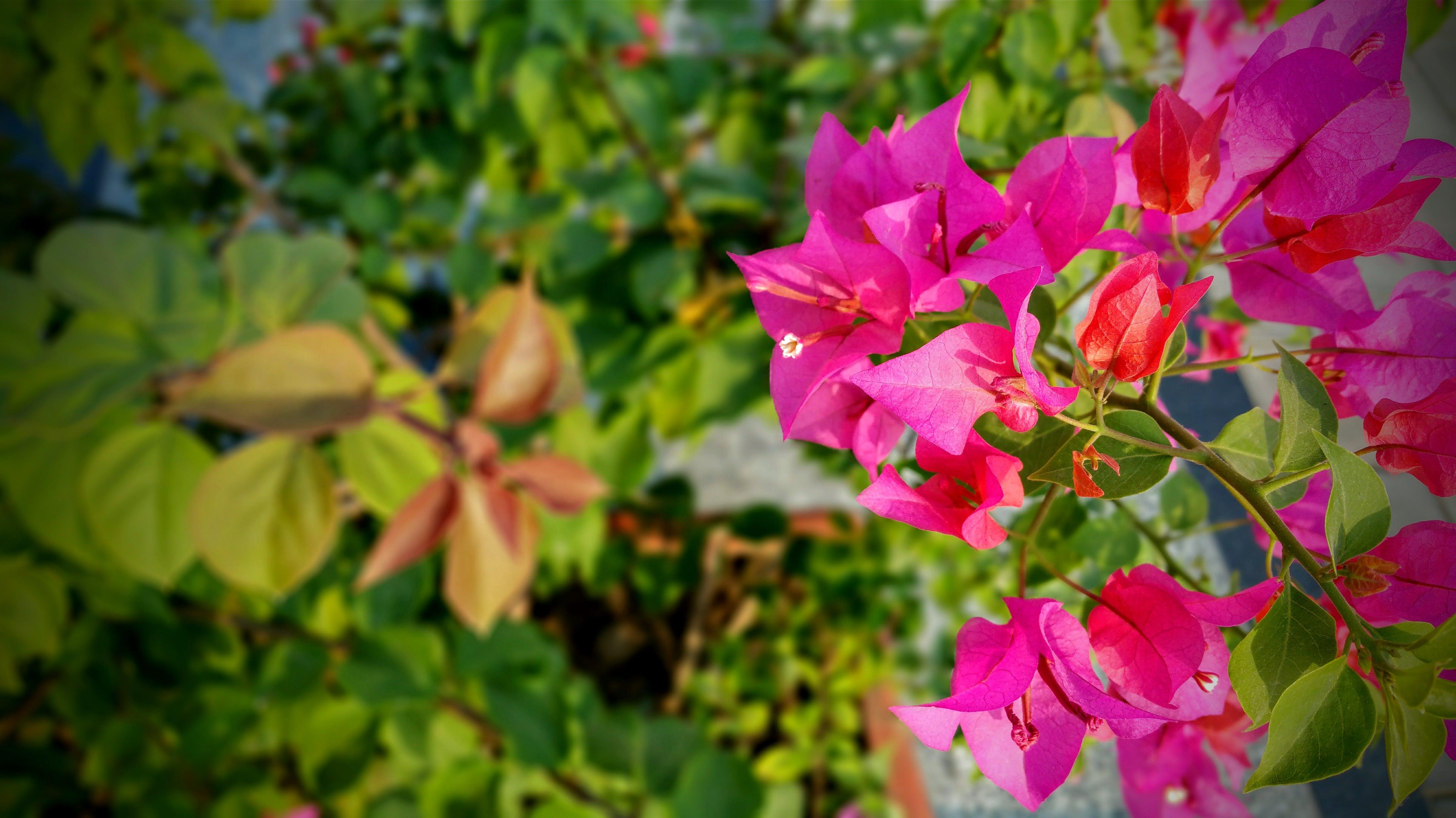 Kostenloses Stock Foto zu ast, blätter, blühen, blühende pflanze