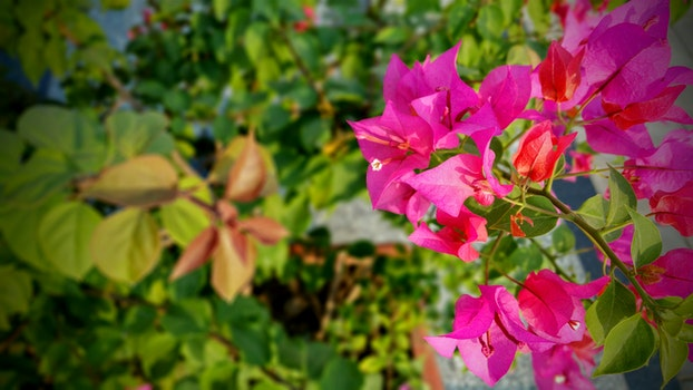 Free stock photo of nature, flowers, summer, garden