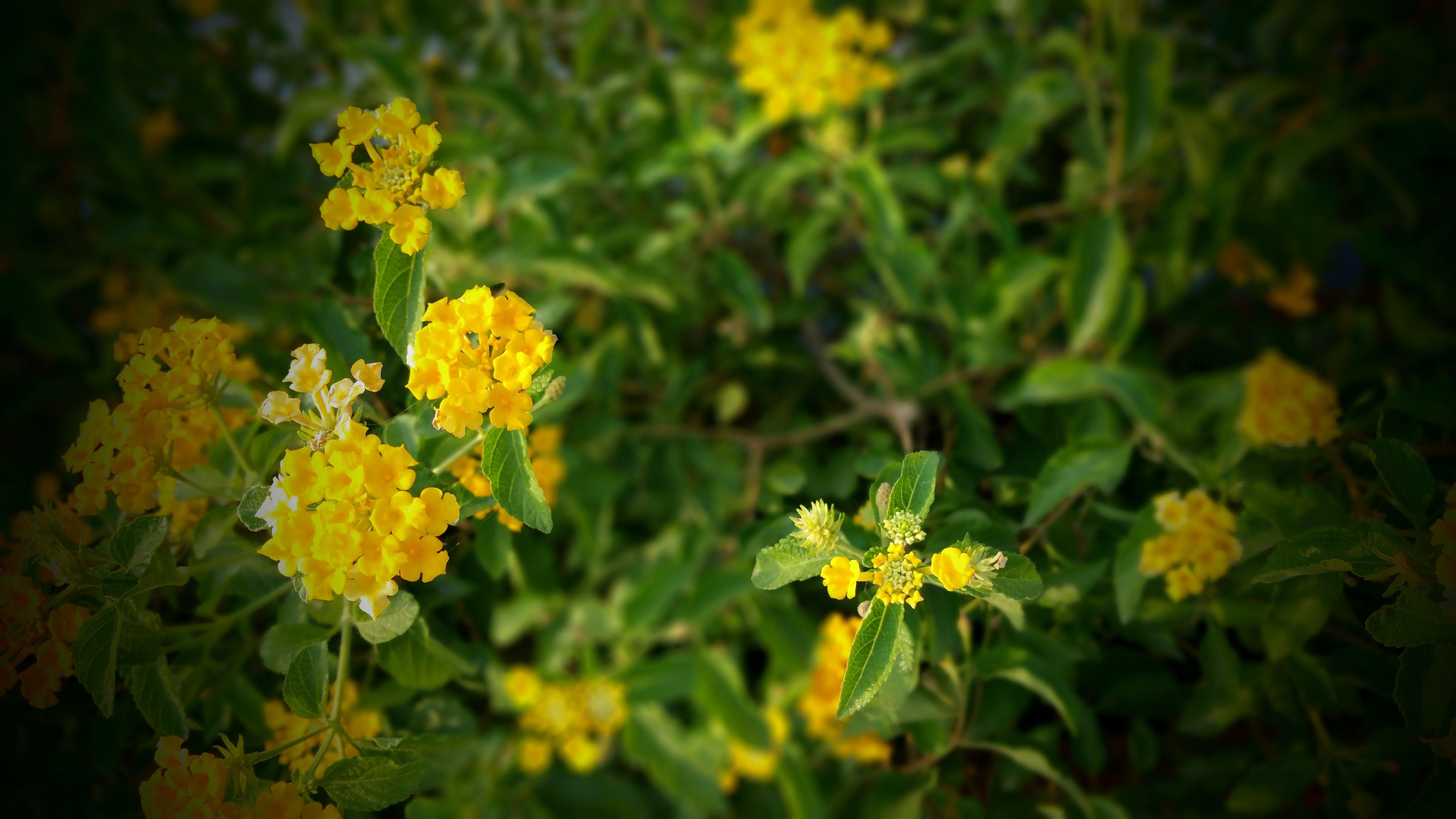 beautiful flowers, bloom, blooming