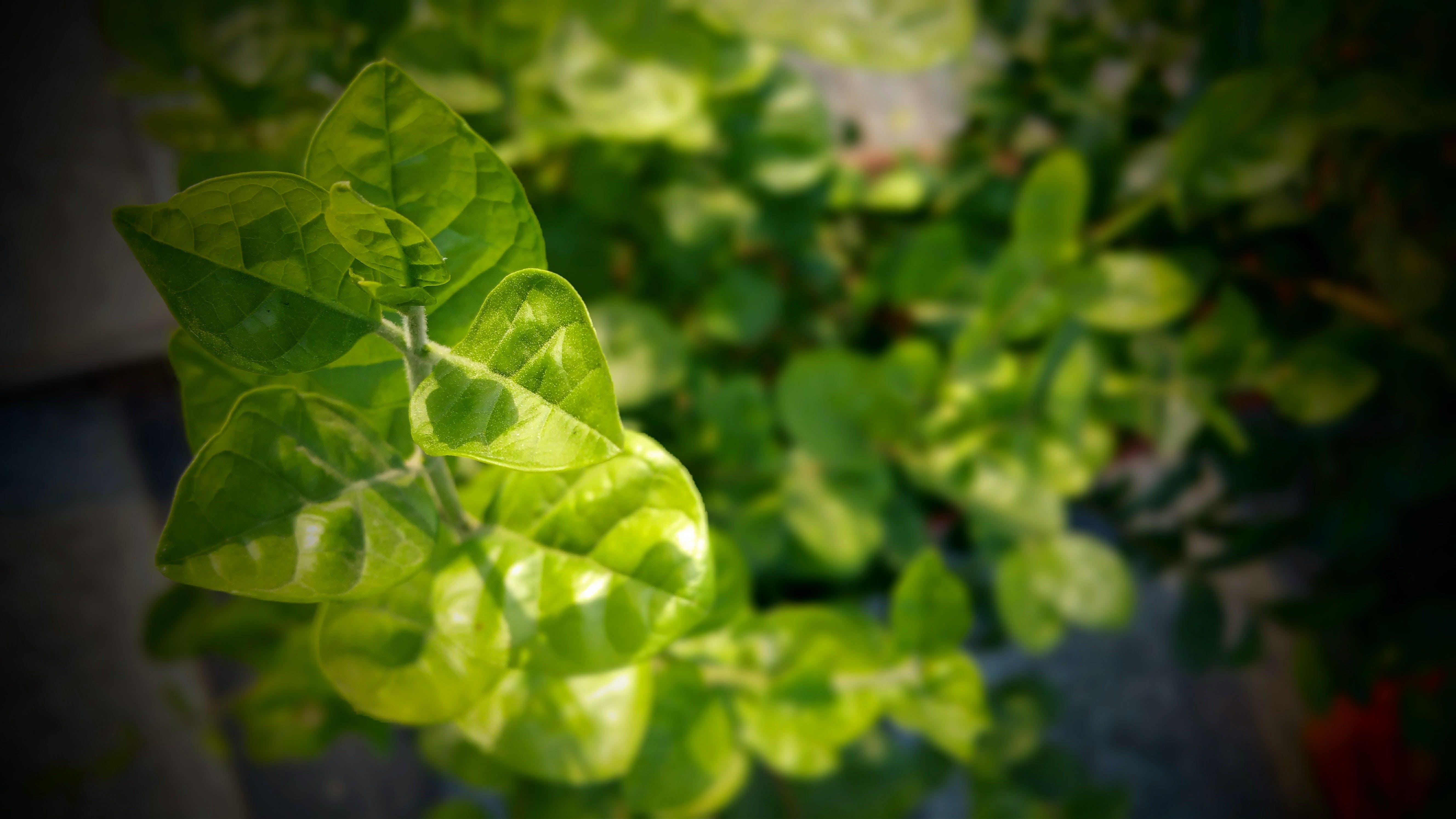 Kostenloses Stock Foto zu essen, flora, frisch, frische