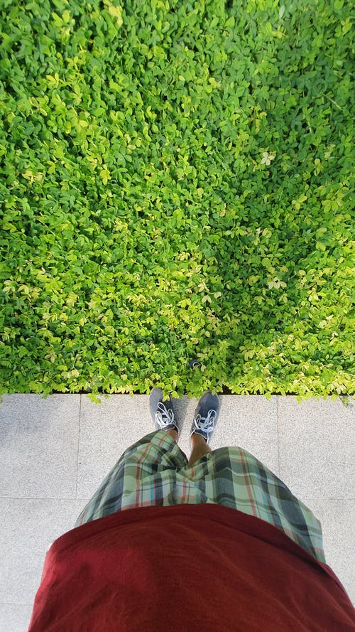 Immagine gratuita di ambiente, colori, crescita, esterno