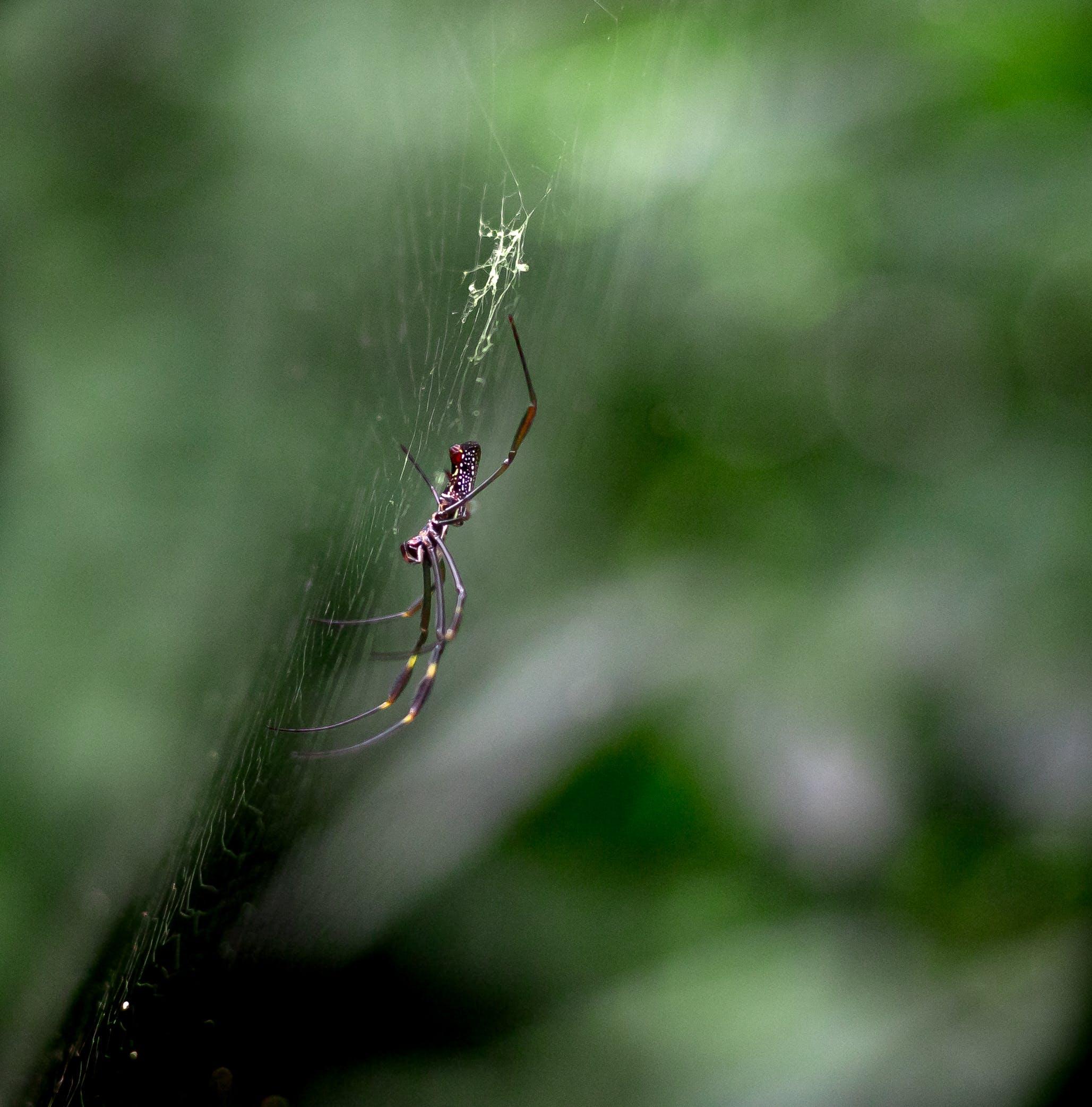 Free stock photo of animal, aranha, green, insect