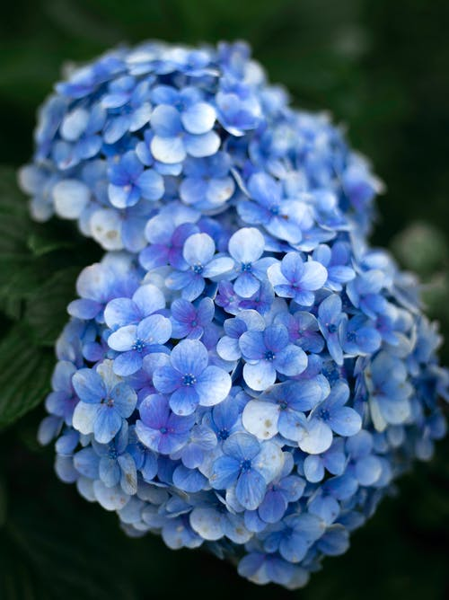 Free stock photo of autumn decoration, Azul, blue, blue flower