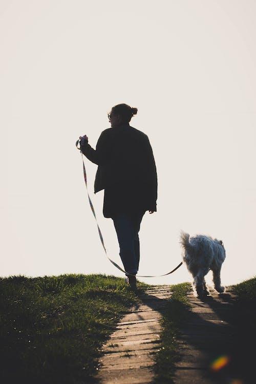 Człowiek Chodzenie Po Ziemi Z Psem