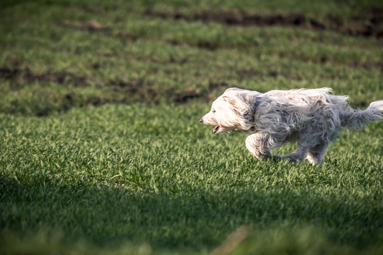 Kostenloses Stock Foto zu gras, grün, hund, keine leute