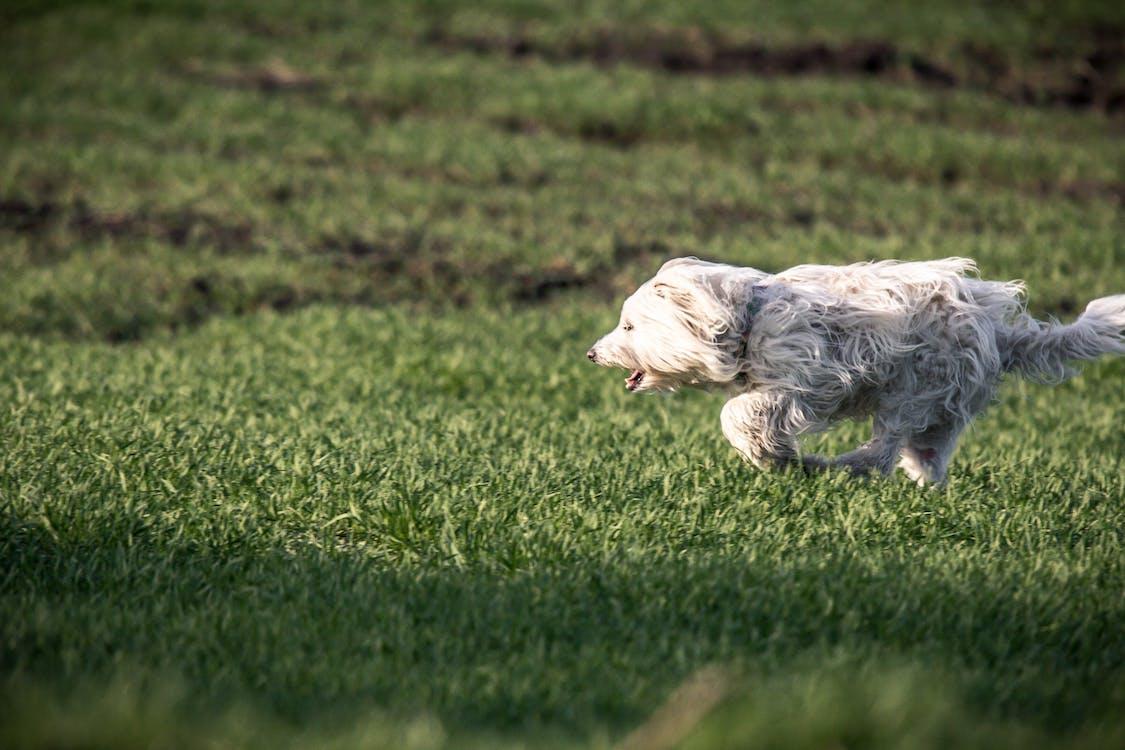græs, grøn, hund