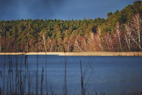 Drzewa W Pobliżu Zbiornika Wodnego