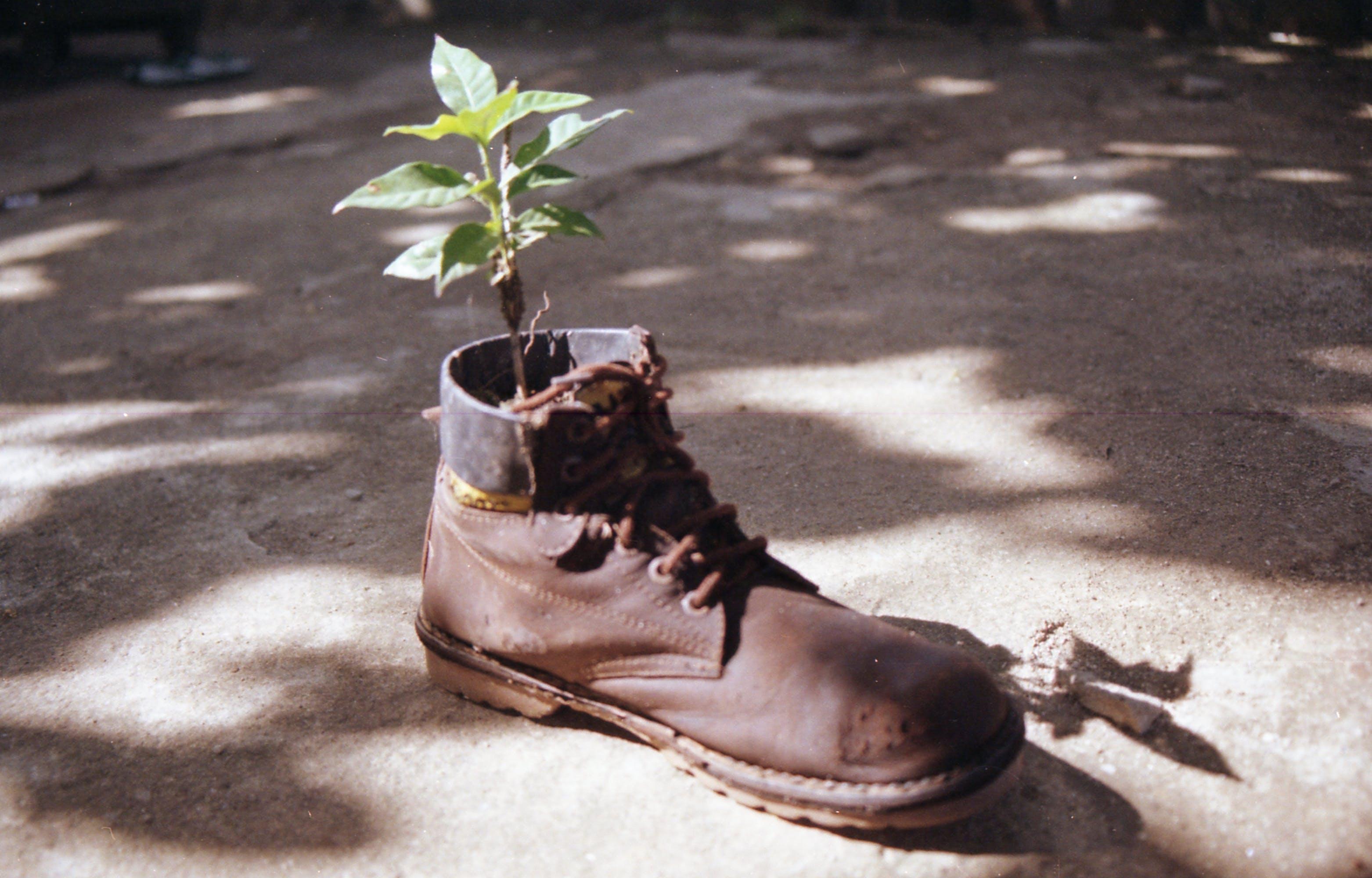 Kostenloses Stock Foto zu grünes blatt, lederschuhe, lederstiefel, pflanze