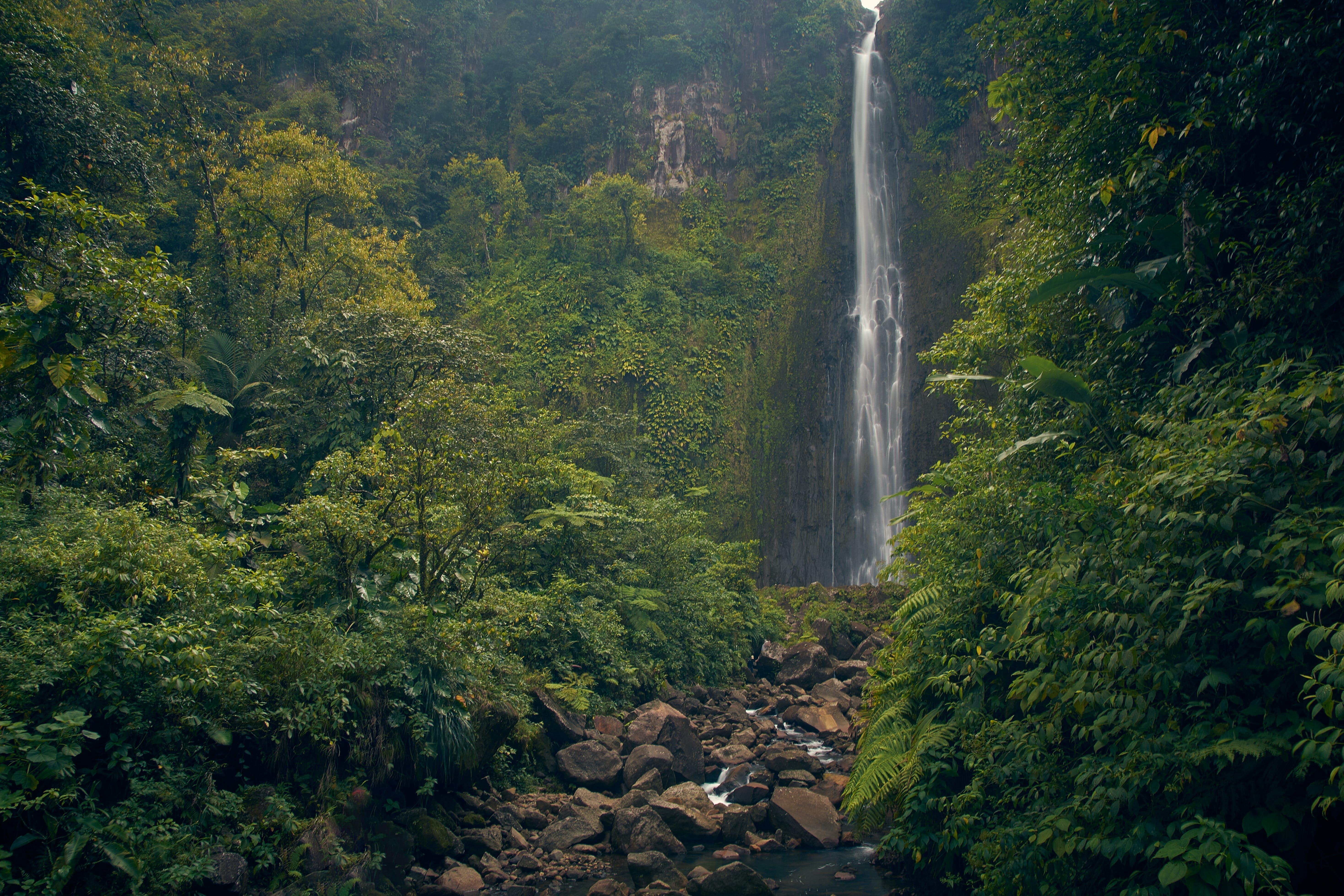 คลังภาพถ่ายฟรี ของ กระแสน้ำ, กลางวัน, ต้นไม้, ธรรมชาติ