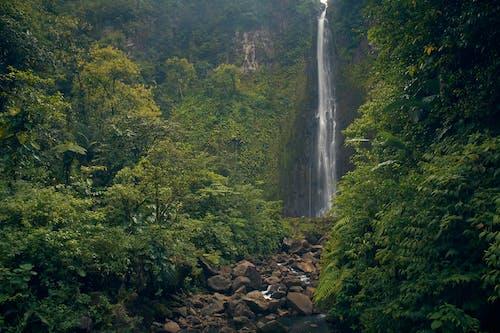 Foto profissional grátis de água, árvores, cachoeiras, cascata