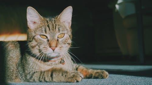 Fotobanka sbezplatnými fotkami na tému mačky, roztomilé zvieratá, zvieratá