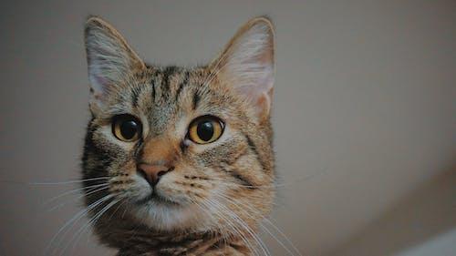 Fotobanka sbezplatnými fotkami na tému mačky, roztomilé zvieratá, zviera