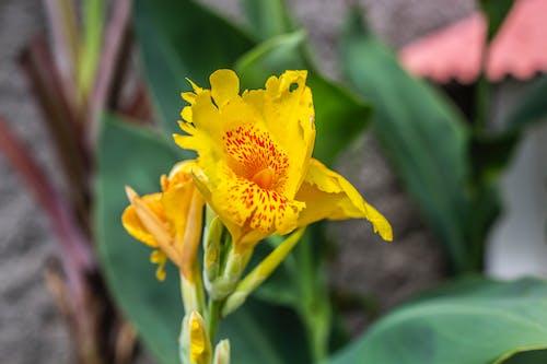 天性, 第一朵花, 綠色, 美丽的花 的 免费素材照片