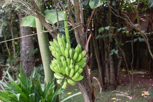 árvores, 大自然, 天性, 巴西 的 免费素材照片