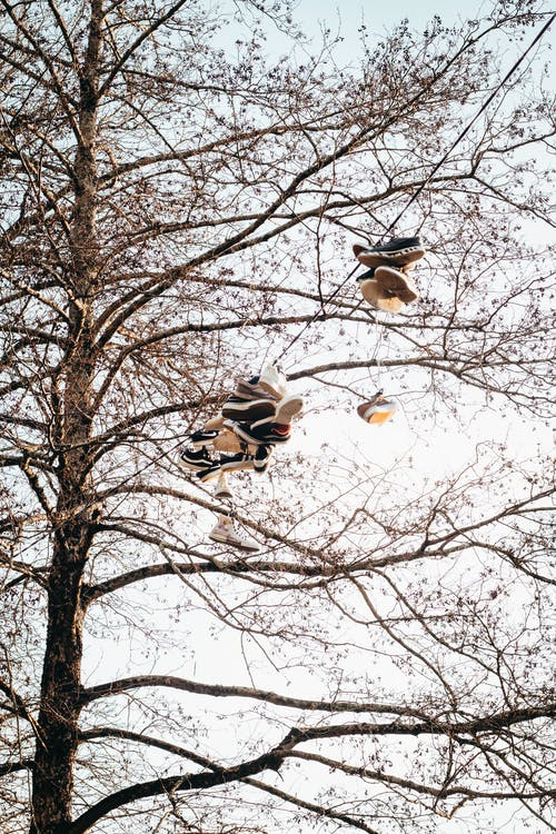 ağaç, Ağaç dalları, asılı, çevre içeren Ücretsiz stok fotoğraf