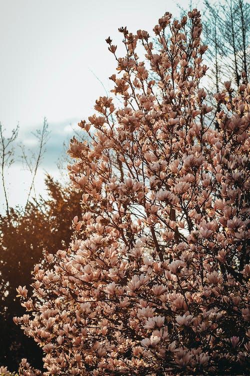 Безкоштовне стокове фото на тему «гілки дерев, Денне світло, дерева, зростання»