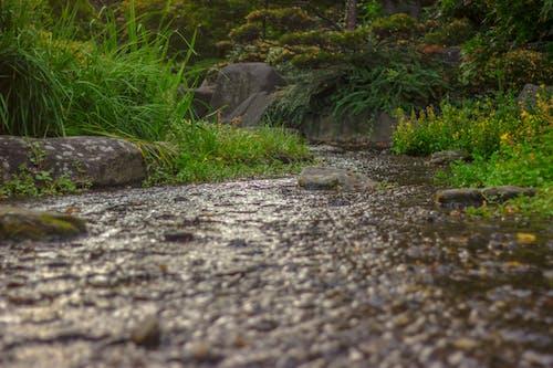 プランター&ブルームウォーターグラス自然の無料の写真素材